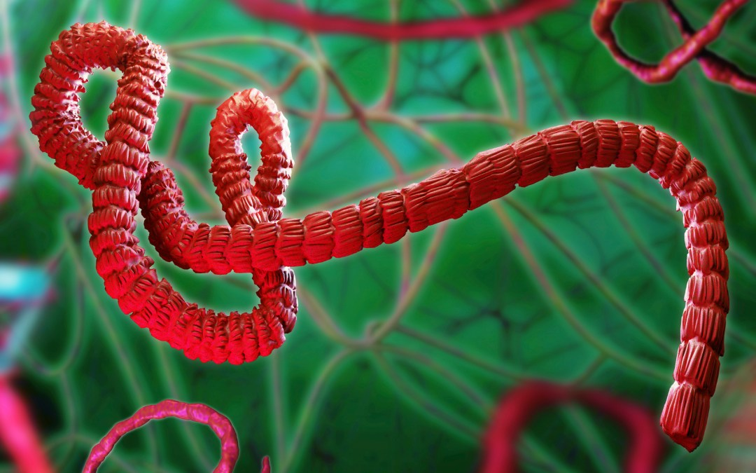 Ebola virus evolving: What does it mean for us?