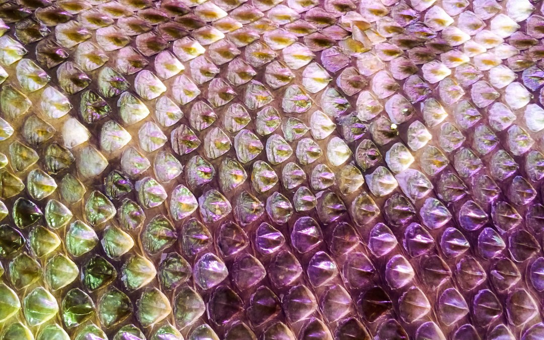 Fish and Snakes: Inspiring New Body Armor