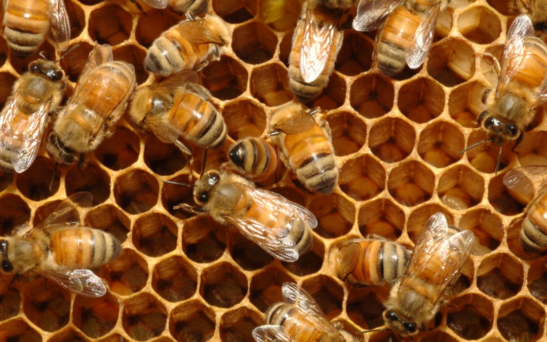 Bees and human medicine: the connection