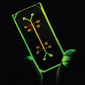 Organ on a Chip – A Reality Check