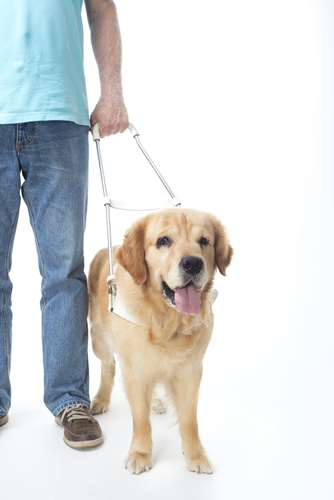 PTSD: Service Dog study to prove benefits