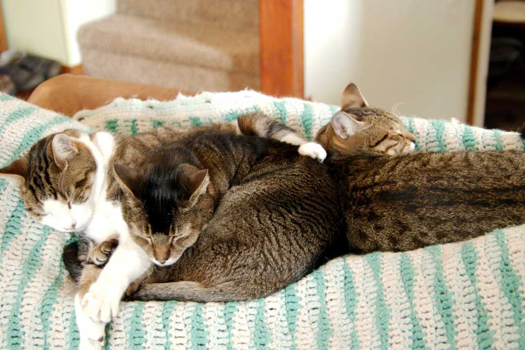 Mercury also likes his kitty housemates. (Photo: Robert Peterson)