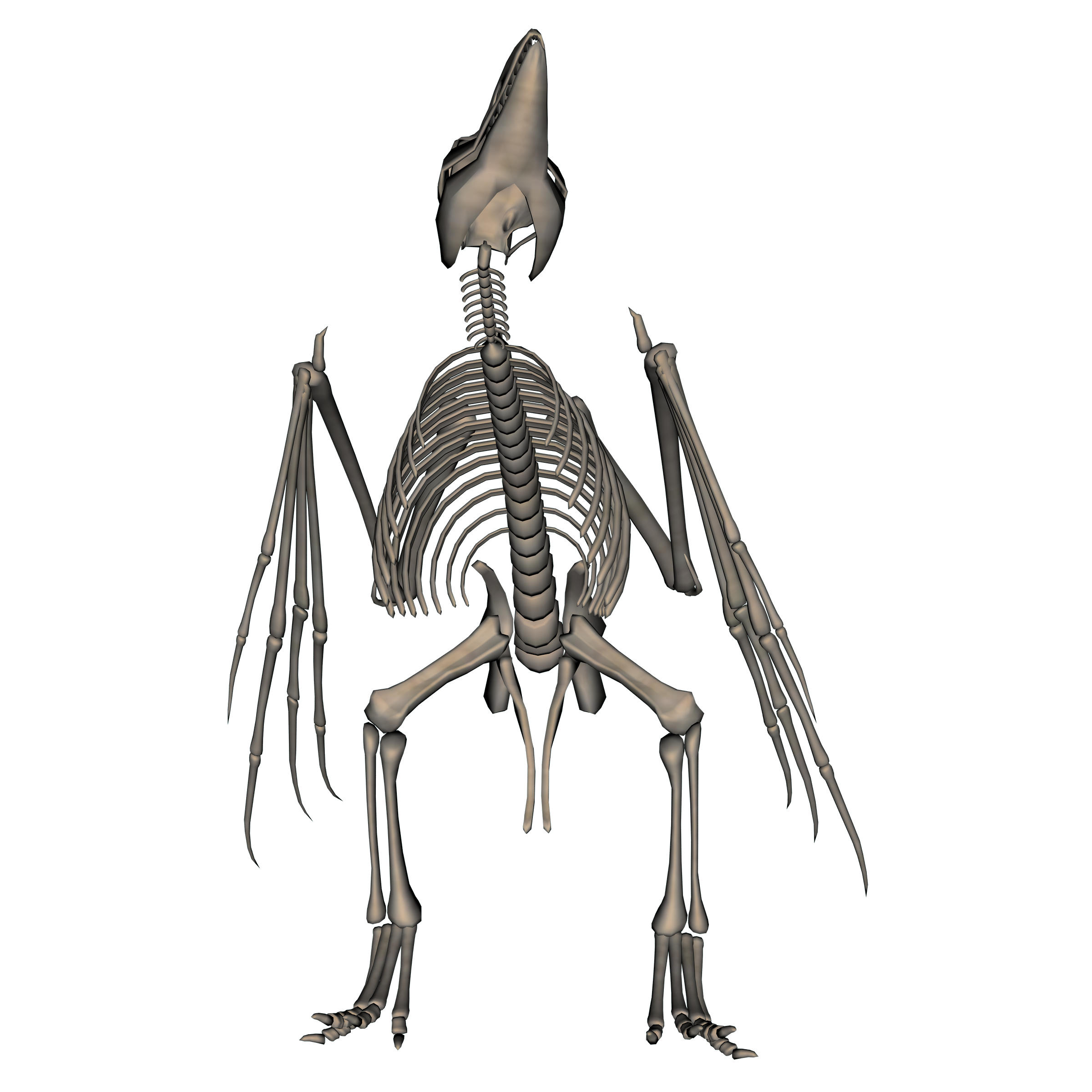 Opinions On Bird Anatomy