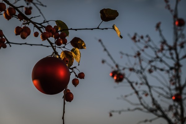 A single red ornament hangs on a tree branch, surrounded by red berries and green-brown leaves, with a pale blue sky in the background.