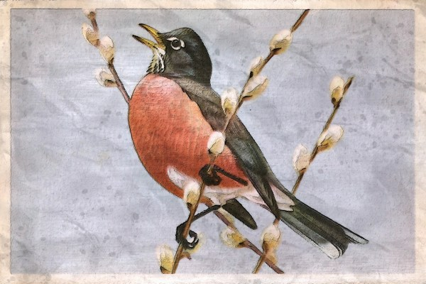 A painting depicting a robin singing while perched on a pussywillow branch. Image by Vinson Tan (楊 祖 武 ) from Pixabay.