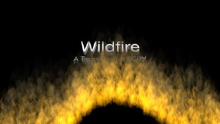 Wildfire Transition
