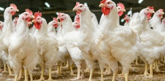 Major food players form animal welfare coalition