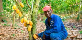 Hershey unveils latest efforts for sustainable cocoa crusade