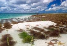 Cargill launches sustainability promise for red seaweed supply chain