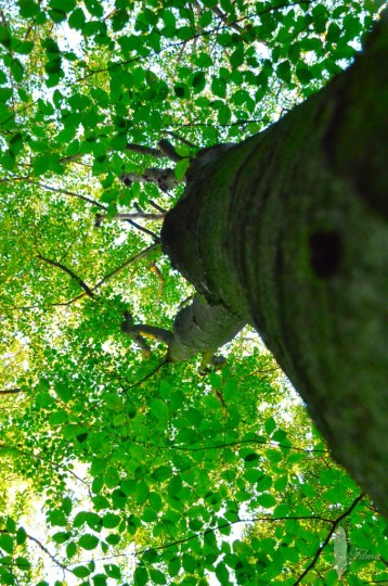 Henschoter bos