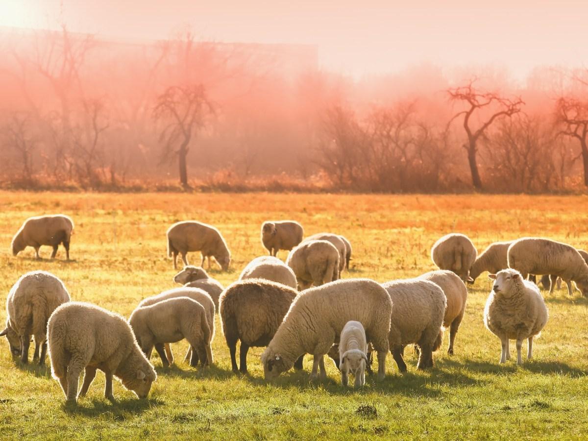 Pacte biosécurité et bien-être animal