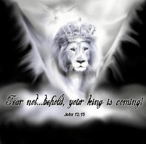 Fear not behold your king is coming lion black and white
