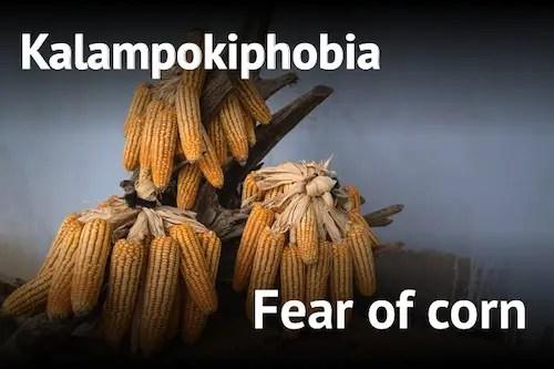 fear of corn kalampokiphobia