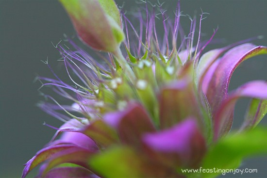 Beaautiful Flower