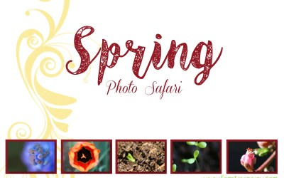 Spring Photo Safari