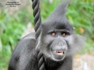 monkey-photograph-by-kathy-mackenzie