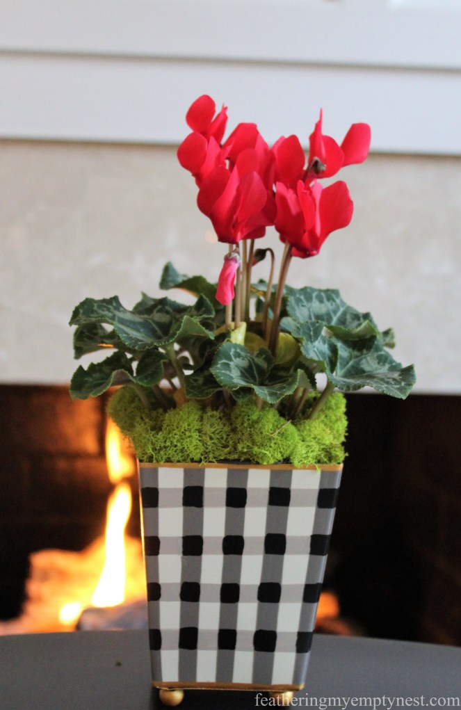 Red Cyclamen in a gingham cachepot is a cheery centerpiece for a winter supper of White Bean Soup & Bruschetta
