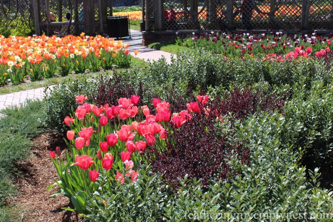 Tulips and trellises in the Walled Garden --A Spring Tour Of The Biltmore Estate Gardens