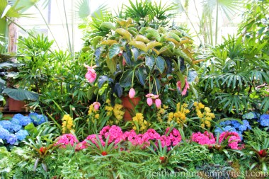 Gorgeous display of orchids