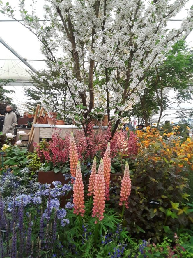 Hillier and STIHL Inspiration garden, 2018 Chelsea Flower Show --Why The Chelsea Flower Show Should Be On Your Bucket List