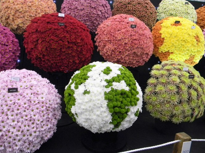 Chrysanthemum solar system, 2018 Chelsea Flower Show --Why The Chelsea Flower Show Should Be On Your Bucket List
