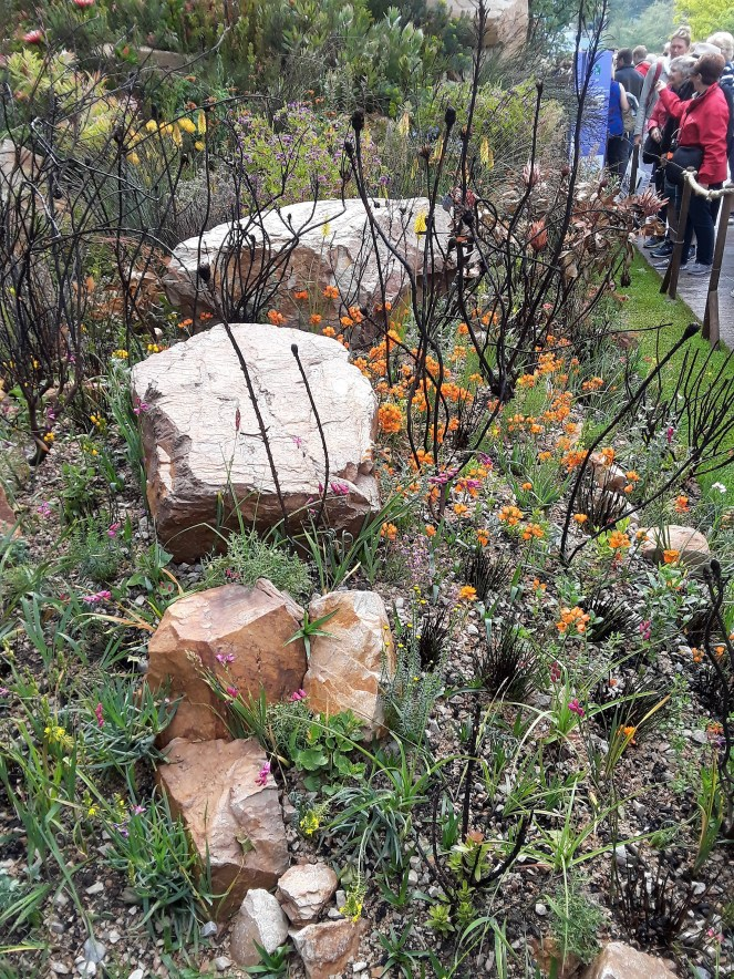 West African fynbos, 2018 Chelsea Flower Show --Why The Chelsea Flower Show Should Be On Your Bucket List