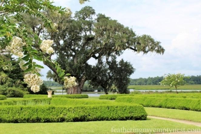 Sundial Garden and Middleton Oak --Exploring The Enchanting Gardens Of Middleton Place