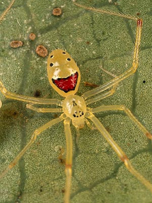 happy face spider  # 58