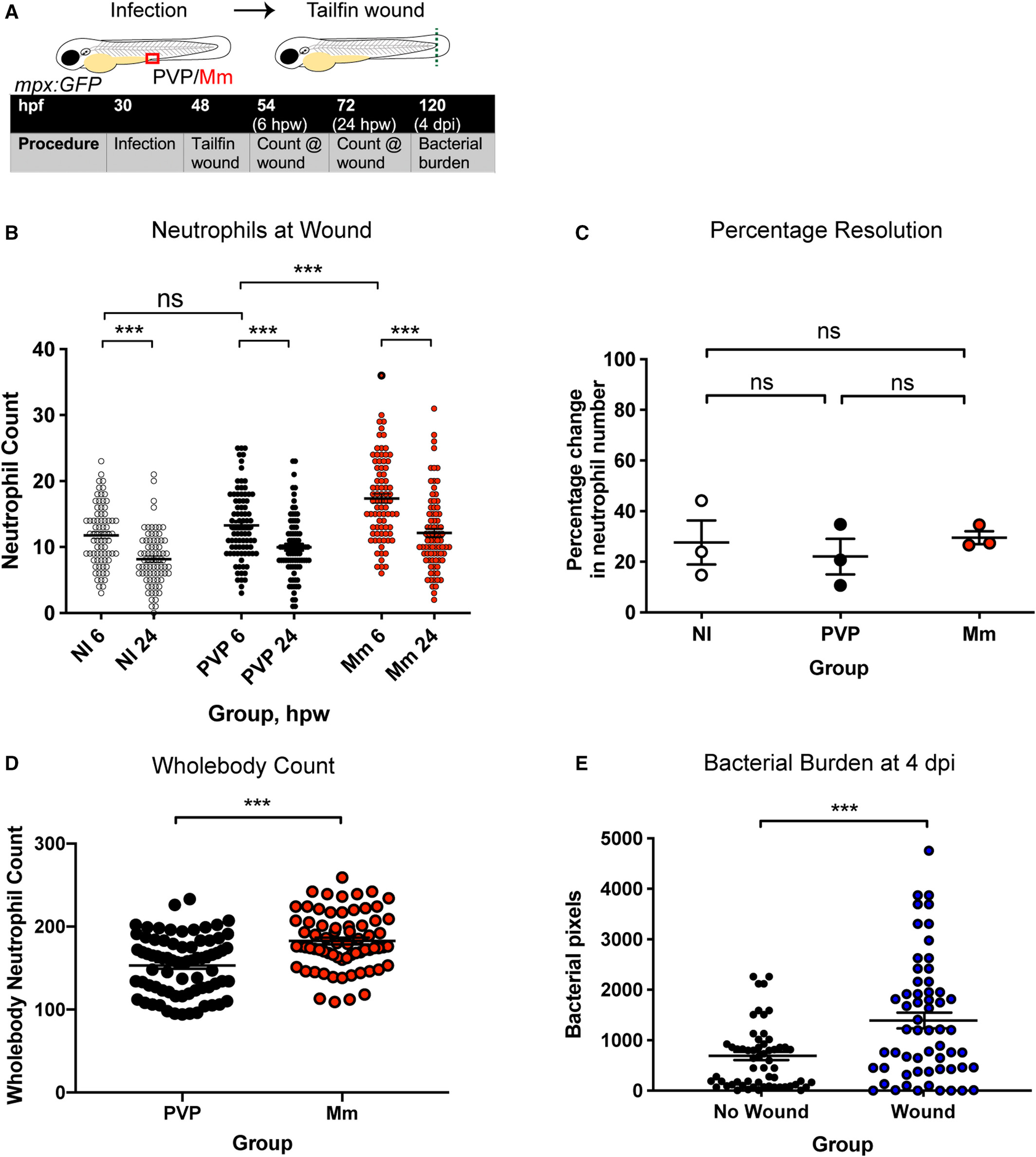 Hif 1alpha Stabilisation Is Protective Against Infection