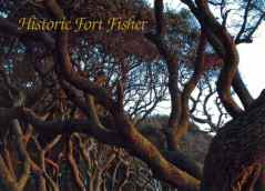 Fort Fisher Maritime Forest of Live Oaks