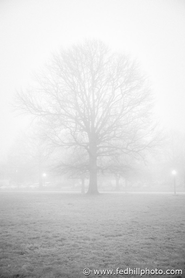 Baltimore, Federal Hill Photography LLC, SKU-28, United States, black and white, calm, cloud, fine art photography, fog, landscape, maryland, mist, monochrome, nature, park, plant, riverside park, sky, spring, stock photography, tree, weather, wood