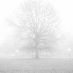 Black and white fine art photo of leafless tree silhouette in mist and fog in Riverside Park in Baltimore City, Maryland.