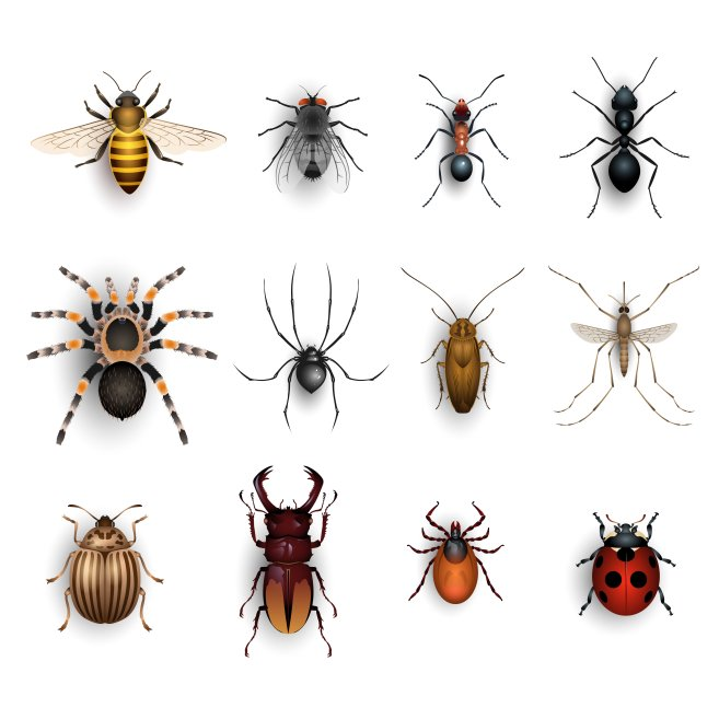 Image result for bugs