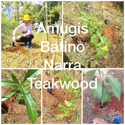 Species Planted.jpg