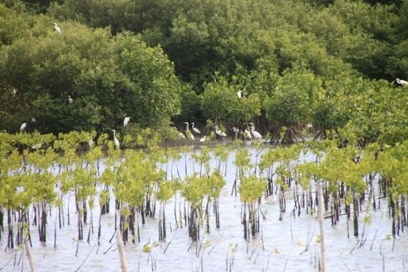 malolos mangroves.jpg