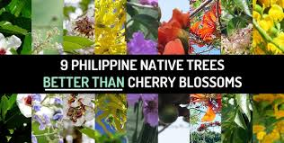 9-PH-Native-Trees-Better-Than-Cherry-Blossoms.jpg