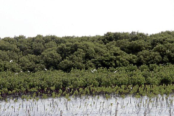 Bulacan Mangroves.jpg