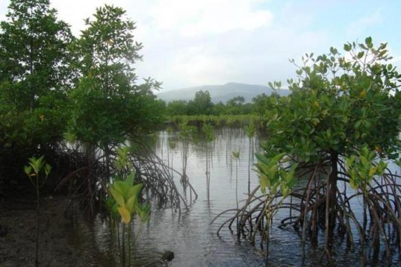 Mangroves-Bulacan.jpg