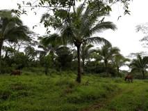 FMC-LQLG-TreePlanting-1108201824