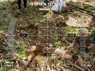 MITIS-Planting-FEED-1304198