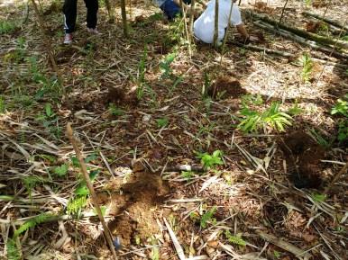 MITIS-Planting-FEED-1304199