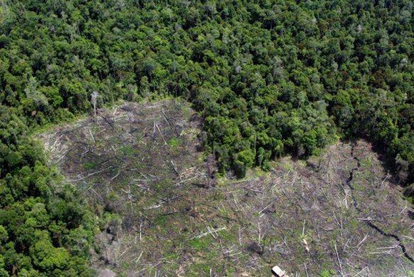 SierraMadre-deforestation.jpg