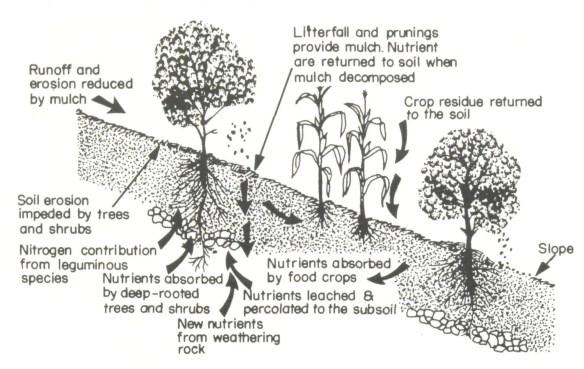 agroforestrydesign.jpg