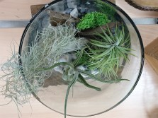 NatRe-FEED-Habil-Airplants-02Aug201942