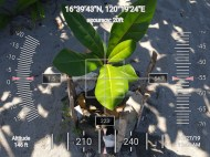 FEED-KARPOS-BOTONG-Planting-Urbiz-2710201914