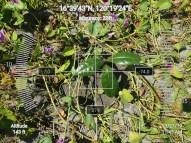 FEED-KARPOS-BOTONG-Planting-Urbiz-2710201915