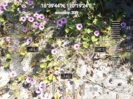 FEED-KARPOS-BOTONG-Planting-Urbiz-2710201917