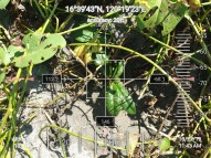 FEED-KARPOS-BOTONG-Planting-Urbiz-271020195