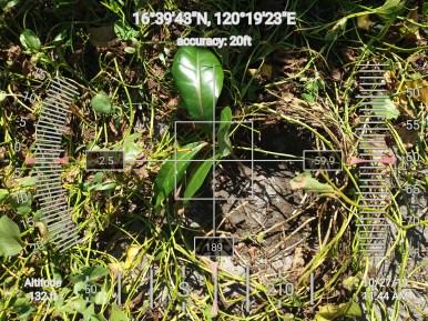 FEED-KARPOS-BOTONG-Planting-Urbiz-271020199
