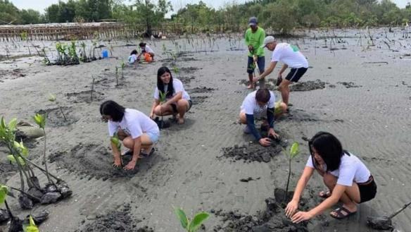 Sali's family and volunteers planting mangroves
